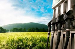 Panderías a domicilio La levadura y los biocarburantes